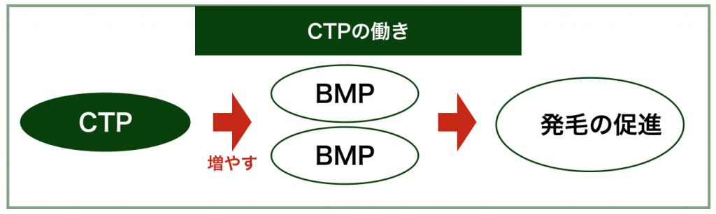 CTPの働き