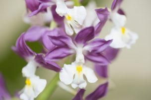 世界一詳しいエビネ蘭エキス完全ガイド|効果から活用法まで