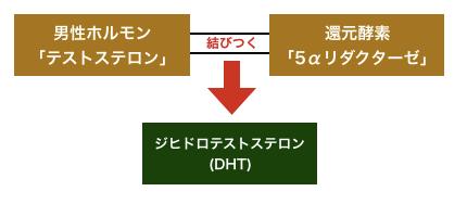 ジヒドロテストステロンが作られる仕組み