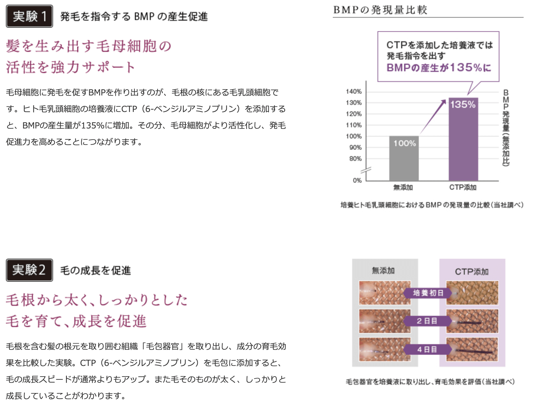 BMPの発現量比較