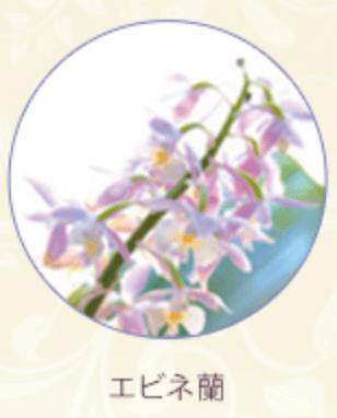 エビネ蘭のイメージ